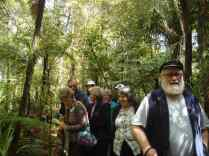 Bird watching at Puketi Forest